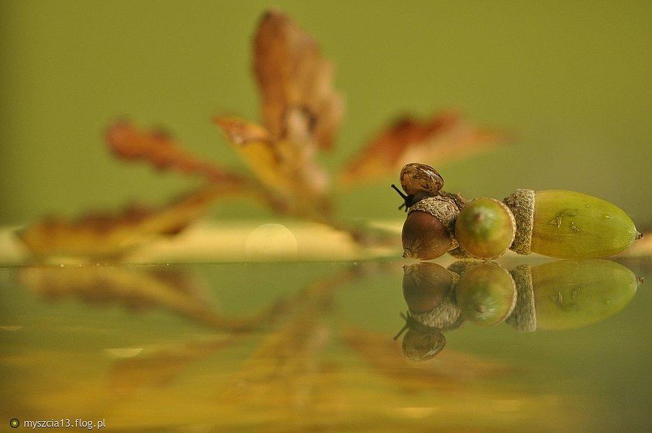 Impresja jesienna....