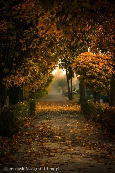 http://s16.flog.pl/media/foto_middle/10492699_kolory-jesieni.jpg
